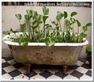 bañera 1