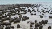piedras en groenlandia